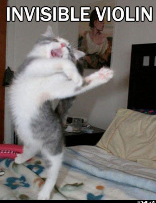 Lustige katze spielt violine
